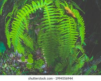 Green fern powerful color in rainyday