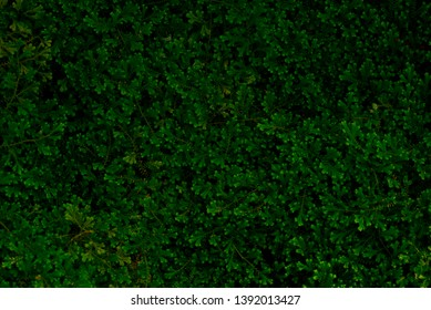 Green of fern texture background