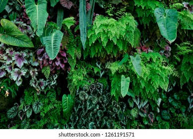 Green fern tropical forest environment in conservatory natural garden dome background or backdrop design