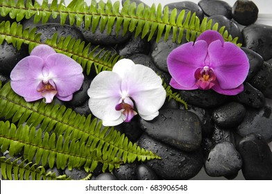 green fern and white ,pink,red orchid , on wet pebbles