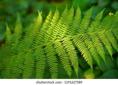 Green Fern in the woods - Shutterstock ID 1191627589