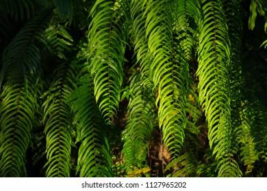 green ferns leaf in forest