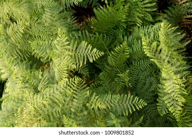 Green ferns shot from above