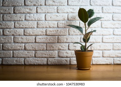Green ficus over white decorative brick wall background