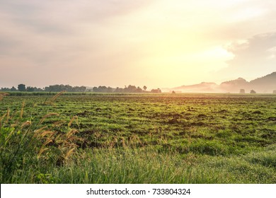 Green field against sunlight in sun set time.Morning in the countryside