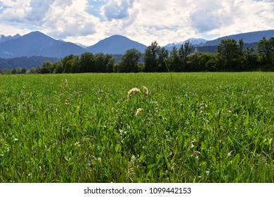 Green field with The Alps in the background