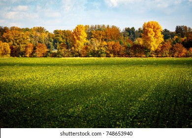 Green field with autumnal trees in the background.
