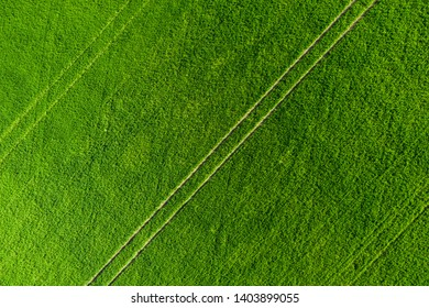 Green field background. Agricultural meadow from above. Summer fields aerial view