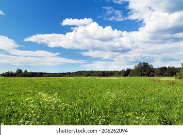 green field background nature grassland and blue sky