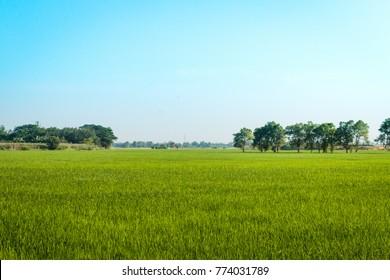 Green field with beautiful sky.  Summer rural landscape.