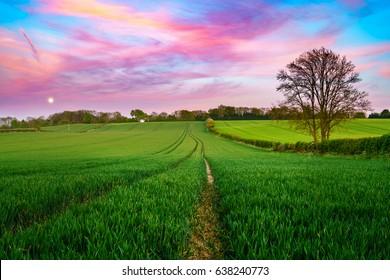 Green field at beautiful sunset sky - British countrysude