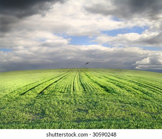 Green field before a storm