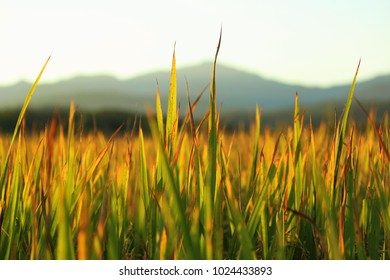 Green field before sunset