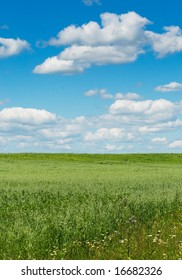 green field with blooming flowers and blue sky