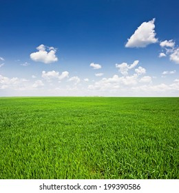 green field and blue sky. Landscape