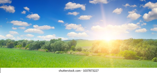 Green field and blue sky with light clouds. Above the horizon is a bright sunrise. Agricultural landscape. Wide photo