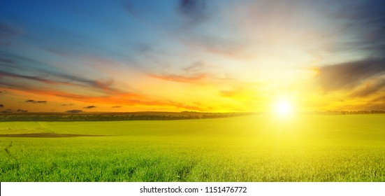 Green field and blue sky with light clouds. Above the horizon is a bright sunrise. Agricultural landscape. Wide photo.