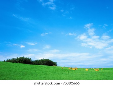green field and blue sky nature