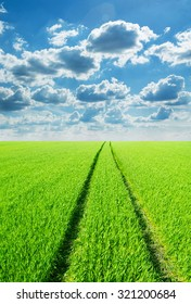 Green field and bright blue sky