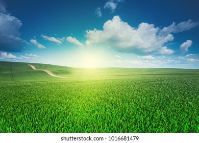 Green field, clear blue sky. Spring nature. Spring natural background.