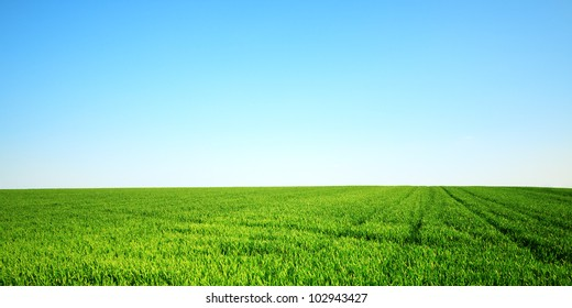 Green field and clear sky