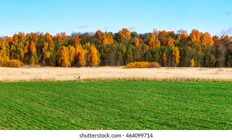 Green field with colorful trees on the horizon. Autumn landscape.