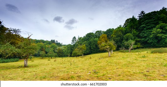 Green field in countryside with trees and woods in distance, Belgium. belgium europe