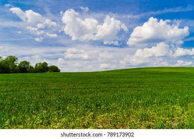 A Green Field of Crops near Ruba, Vitebsk Oblast, Belarus