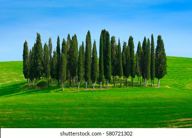 Green field with dark blue sky with white clouds and trees, landscape from Tuscany, Italy. Summer green meadow with cypress trees.