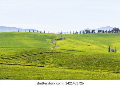 Green field with a dirt road and Cypres trees