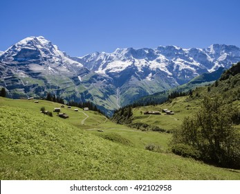 The green field with the Eiger on the background, Switzerland