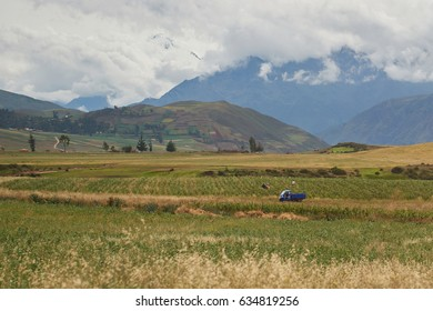 Green field with farmers harvesting crop. Natural agriculture background