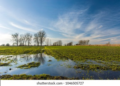Green field flooded with water