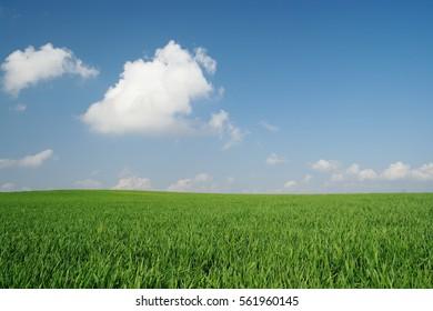 A green field full of sunshine