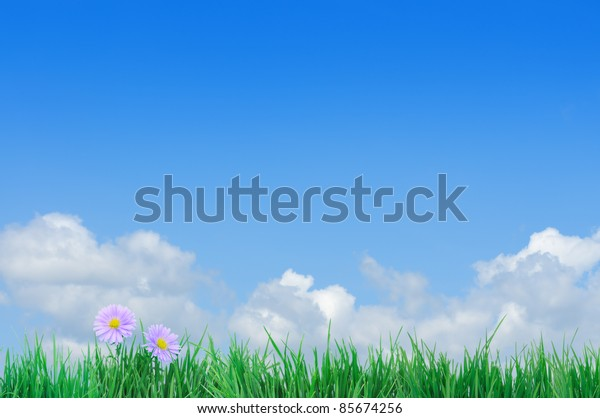 Green field, grass, blue sky and white clouds, flowers.