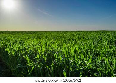 Green field horizons