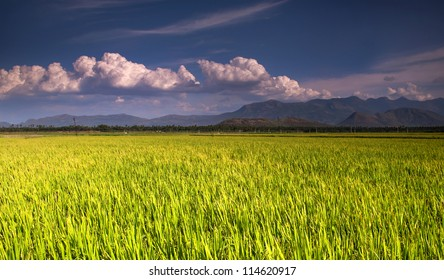 Green field in India