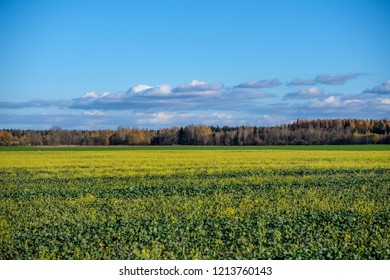 green field in late autumn with forest in background and broken clouds above blue sky