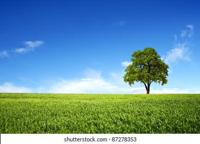 Green field with lone tree