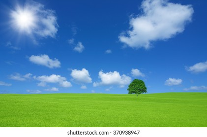 Green field with lone tree and white cloud