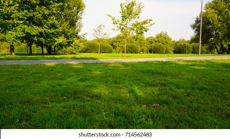 Green field with lovely sunlight