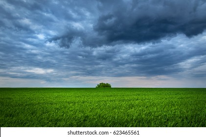 Green field of new wheat plant a cloudy day