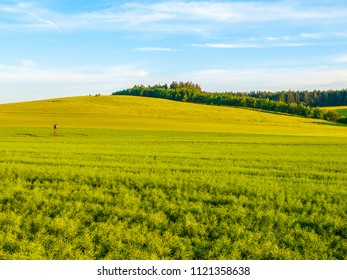 Green field panorama landscape. Panoramic view in the spring evening.