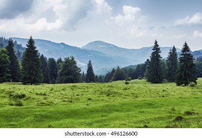 Green field and pine forests in the Carpathians, Romania. Pastures in mountain valleys. Mountaintop meadows, surrounded by (fir) pine forests.
