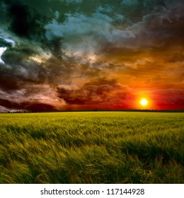 green field at red sunset