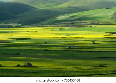 green field, relax