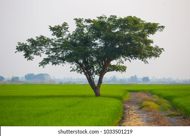 Green field, road and tree background