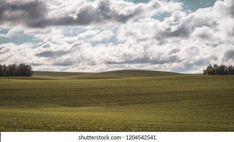 Green field with slightly cloudy sky