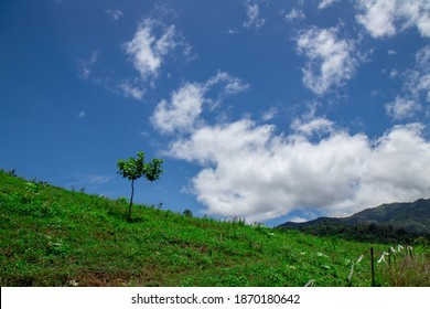 Green field with small tree on the mountain with white cloud.