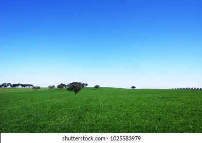 Green field at south of Portugal